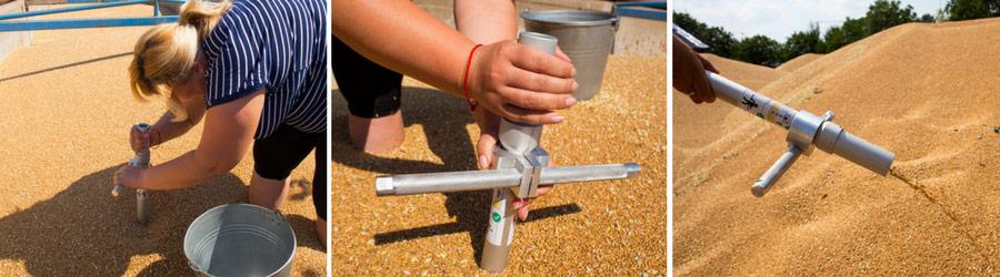 Визировка пшеницы ручным щупом для зерна ПЗК на перевалочном предприятии